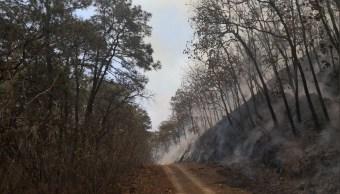 Controlan incendio en EL Bosque de la Primavera; reanudan clases