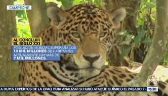 Campeche, Entidad Mayor Superficie Terrestre Acuática Protección Legal