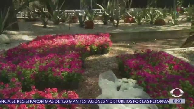 Chapultepec y Polanco se llenan de flores y color