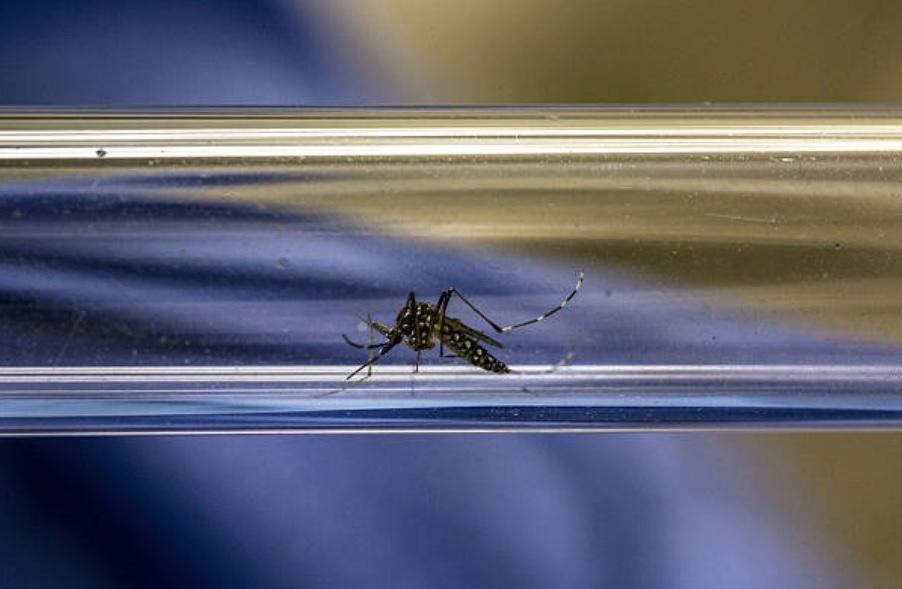Emite OMS recomendación sobre vacuna contra el dengue
