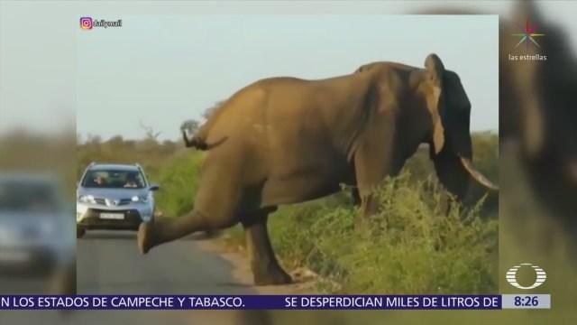 Elefante practica yoga en calles de Sudáfrica