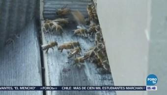 Fomentan crianza de abejas en azoteas de edificios de Nueva York