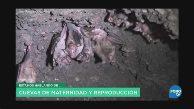 Función Murciélagos Ecosistema Mitos Realidades Ecología