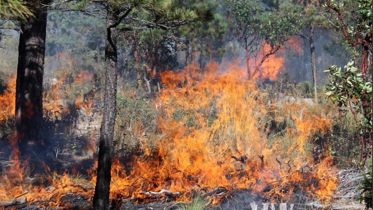 Reportan diez incendios forestales activos en Guerrero