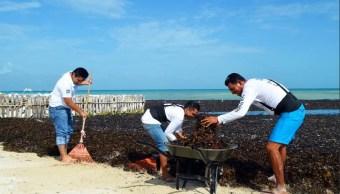 Recolectan toneladas de sargazo en playas de Q Roo