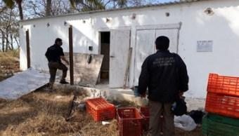 Decomisan más de mil kilos de pepino de mar en Campeche
