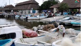 Inicia temporada de pesca de pepino de mar en Yucatán