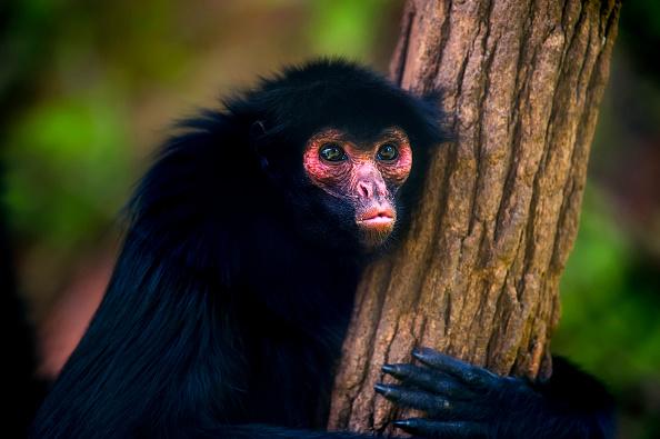 SSPCDMX rescata a mono araña en la delegación Iztacalco