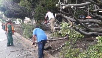 Lluvias provocan caída de árboles en Cuernavaca, Morelos