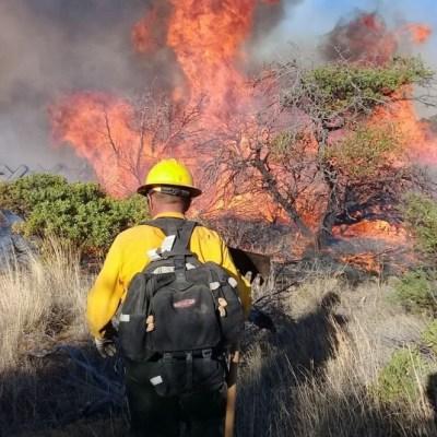 Suman 266 incendios forestales en Chiapas; 86 en áreas naturales protegidas