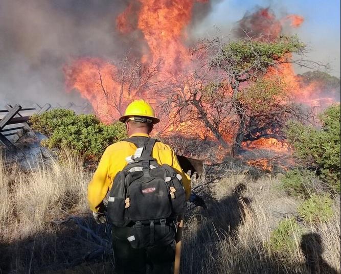 Conafor reporta 5 mil incendios forestales