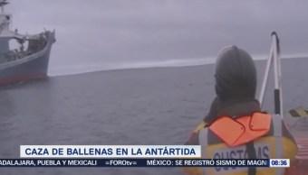 Extra Extra: Japón caza 333 ballenas en la Antártida