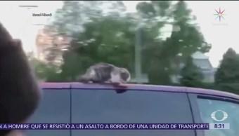 Familia olvida a gato sobre toldo de coche