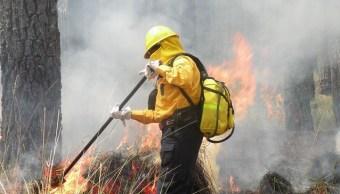 Reportan dos incendios forestales activos en Quintana Roo