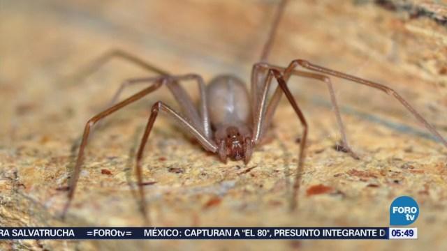 Investigadores de la UNAM crean antídoto contra