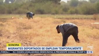 Mexicanos deportados encuentran empleo en Sonora