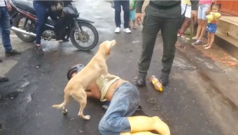 Perro cuida a mordidas a su amo borracho