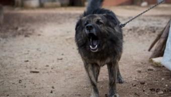 Perro Mordida Infección Herida Lesión Antibiótico