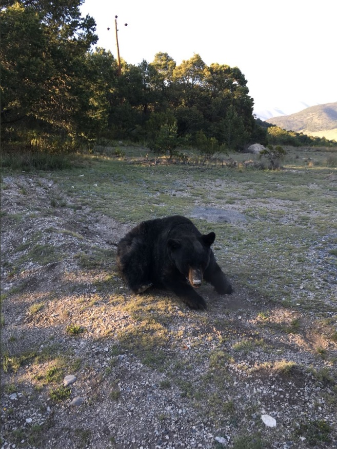 rescatan a oso negro que entró a casa galena nuevo león