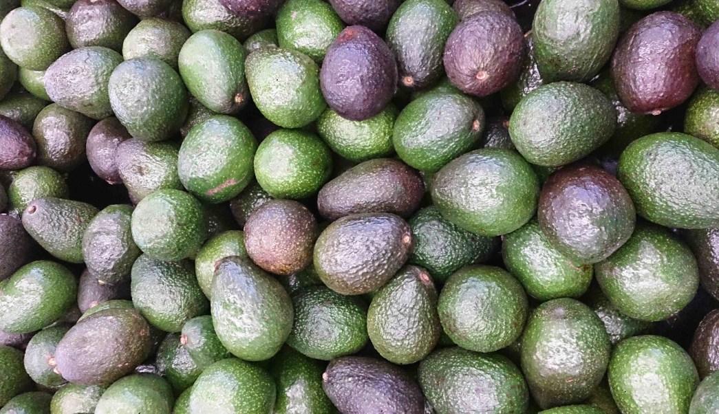 monton-de-aguacates-cultivados-en-mexico-aguacates-alimento-de-moda-en-europa-asia-estados-unidos