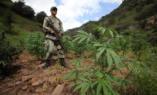 productores marihuana amapola guerrero piden legalizar culti