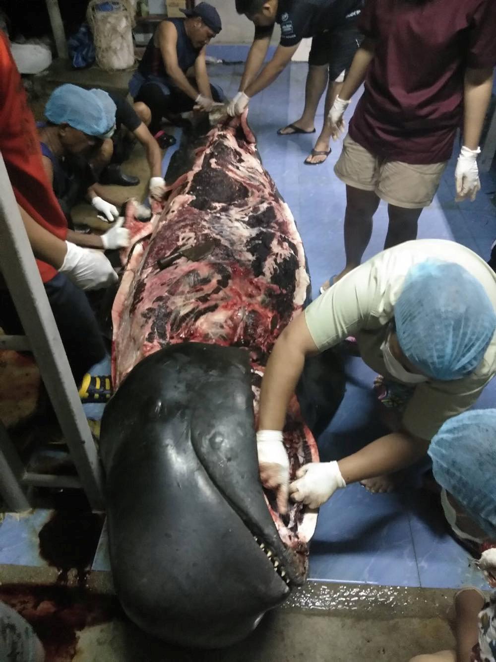 Ballena muerta con 80 bolsas de plastico en el estómago