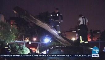 Cae árbol de 25 metros de altura en San Juan de Aragón, CDMX