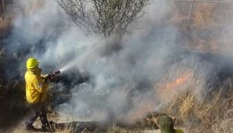 Reportan cinco incendios forestales activos en Sonora