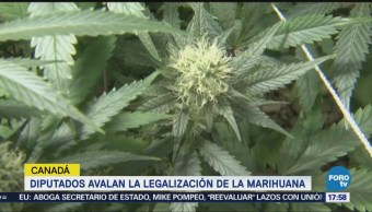 Canadá Aprueba Proyecto Legalizar Marihuana