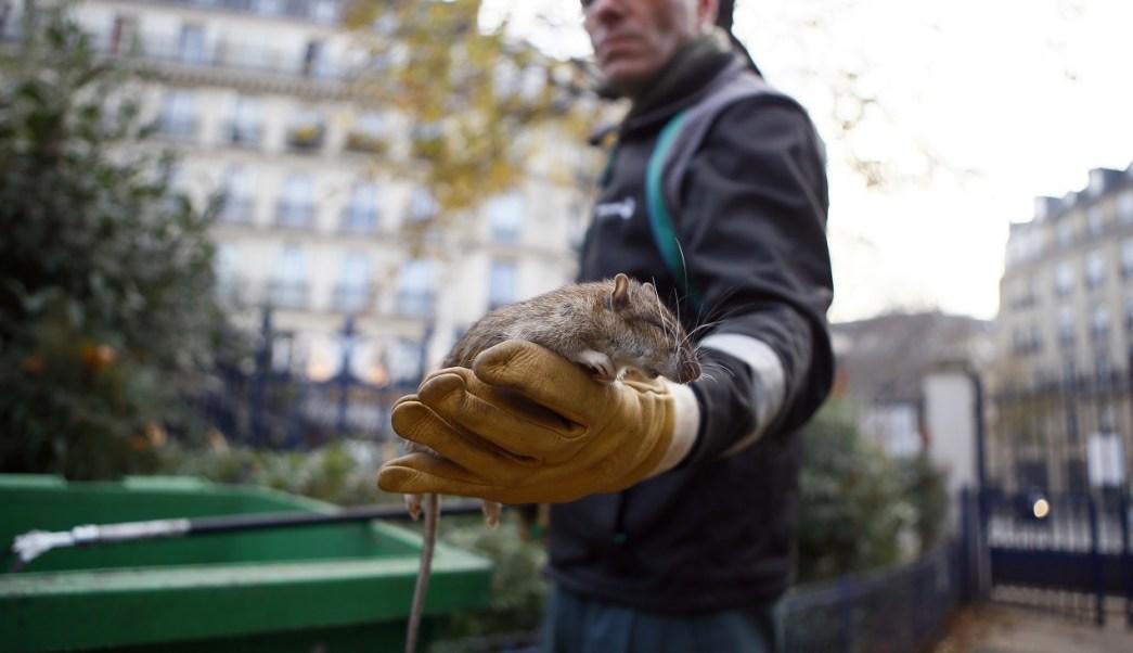 París lanza página web para 'denunciar' una rata