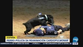 Policía de Madrid presenta a perro que da reanimación cardiopulmonar