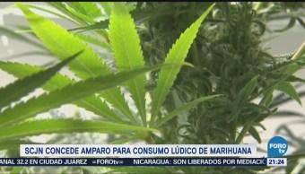 SCJN Concede Amparo Consumo Marihuana Forma Lúdica
