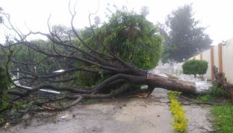 tormenta oaxaca provoca encharcamientos y arboles caidos