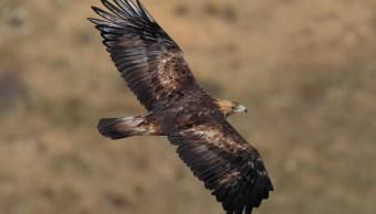 Video Aguila Ataca Niña, Ataques Aguilas, Ataques Animales, Ataques Aves, Aves, Kirguistan