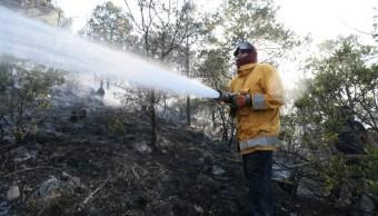 Puebla registra 5 mil hectáreas afectadas por incendios forestales