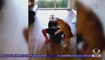 Cachorro husky ayuda a entrenador a hacer abdominales