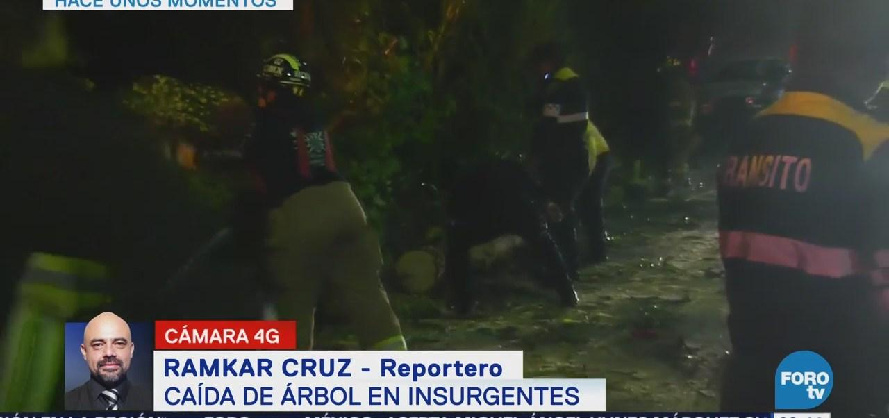 Cae árbol en avenida Insurgentes en CDMX