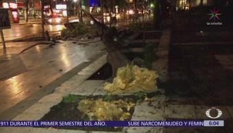 Cae árbol en la Alameda Central de la CDMX