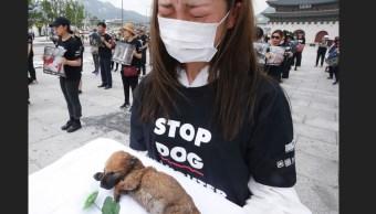 Animalistas Seúl; exigen terminar consumo carne perro