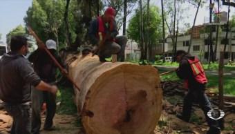 Denuncian deterioro de árboles en Naucalpan