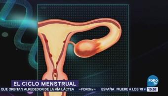 El ciclo menstrual y sus etapas