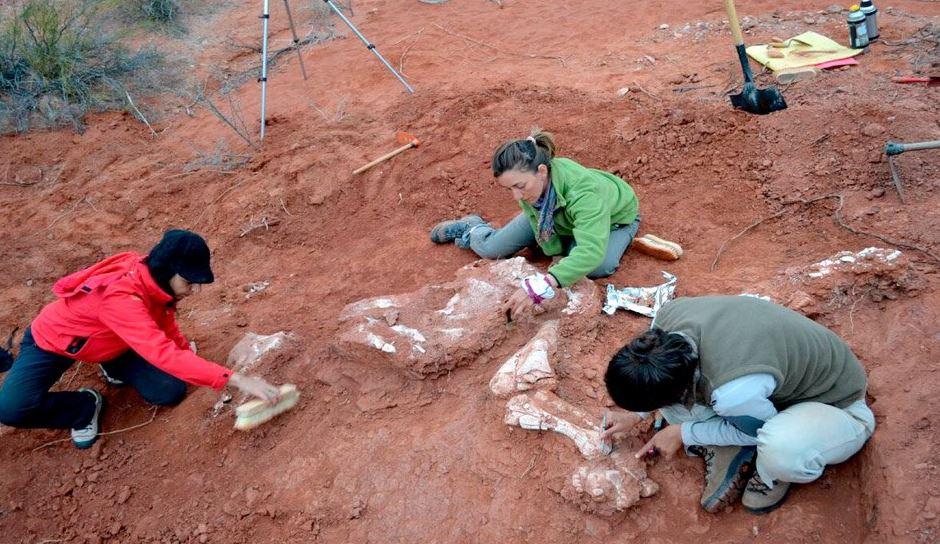 Hallazgo de fósiles Argentina, pistas de evolución