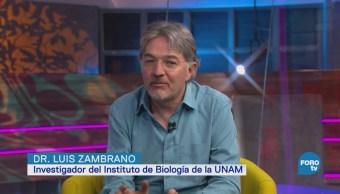 Rescate Ajolote Instituto De Biología De La Unam Xochimilco Luis Zambrano