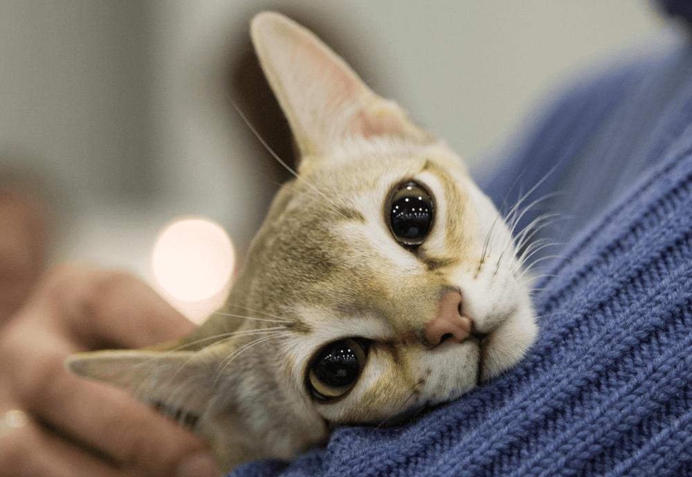 Miles de rusos exigen castigar a una menor por matar gato