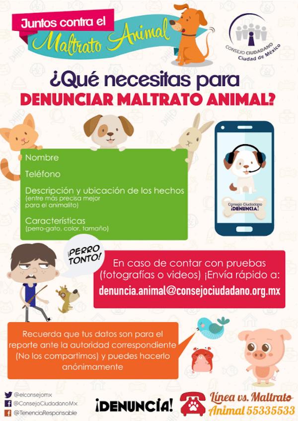Así puedes denunciar casos de maltrato animal en la CDMX