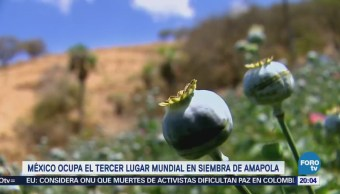 México Tercer Lugar Mundial Siembra Amapola