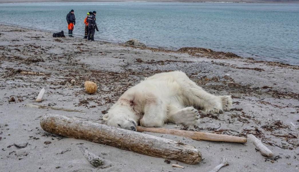 Autoridades noruegas justifican matanza de oso polar
