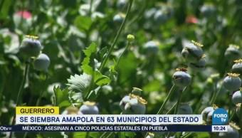 63 Municipios Guerrero Siembra Amapola