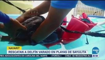 Rescatan delfín varado en playa de Sayulita