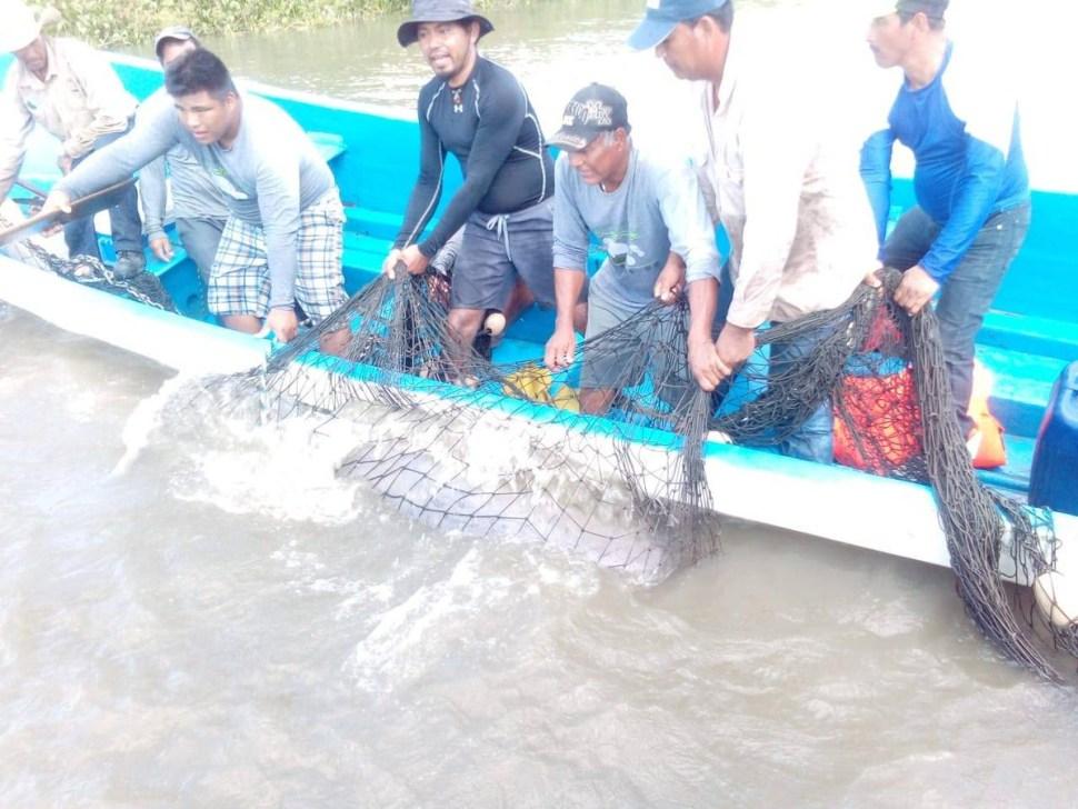 Rescatan y reubican a primer ejemplar de manatí del río Bitza